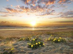 Sunrise – Cavan Flynn