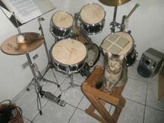 Já tocam instrumentos musicais.