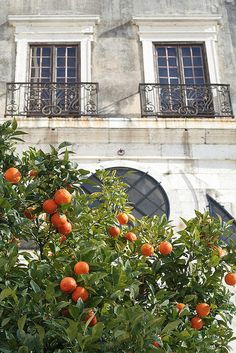 portugal - reminds me of the orange trees my grandmother had behind her house.
