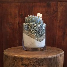 Succulent In A Cylinder Vase With White Sand & Grey Rocks in Venice, CA from The Juicy Leaf, the best florist in Venice. All flowers are hand delivered and same day delivery may be available. Succulents In Glass, Types Of Succulents, Planting Succulents, Planting Flowers, Indoor Succulents, Succulent Plants, Potted Plants, Suculentas Interior, Suculentas Diy