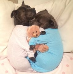 Meet Darren and Phillip – two English Staffordshire bull terriers that are taking the internet by storm with their cuteness. Not only do these furry friends wear warm PJs together, but they just luuuurve to hug. 'Whenever I dress them in their onesies, they immediately want to snuggle', their human Jennifer McLean told The Huffington […]