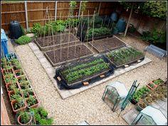 Dream veg plot