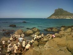 Learning About Sea Creatures at Houtbay Beach Great Names, Independent School, Christian Families, Sea Creatures, Old Pictures, Legends, Environment, Museum, Classroom