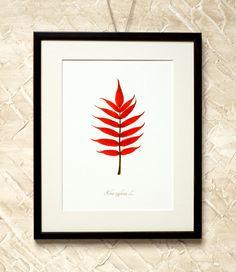 Wall Decor Red Sumach Leaf  7x9'' Print on by RetroPhotographyArt