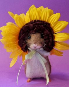 Needle Felted Art by Robin Joy Andreae: My Latest Two Ready for Spring