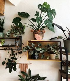 Urban Jungle - plants - vegetal - home - green mood https://www.instagram.com/urbanjungleblog/