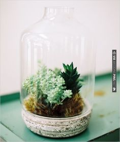 succulent in a jar | CHECK OUT MORE IDEAS AT WEDDINGPINS.NET | #weddings #weddinginspiration #inspirational