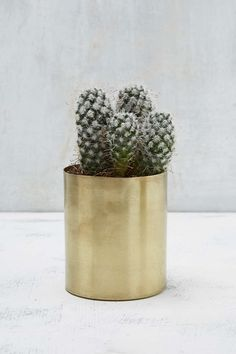 Shop Mod Metal Small Plant Pot at Urban Outfitters today. Urban Outfitters, Small Potted Plants, Stay Gold, Home Gifts, Home Deco, Shrubs, Home Furnishings, Planting Flowers, Planter Pots