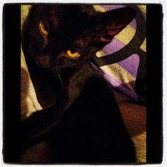 This is my baby boy #black #cat # kitten #kitty #babyboy #blackcat #blackkitty #blackkitten #yelloweyes