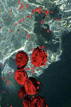 Tumblr iphone red roses wallpaper WALLPAPERS