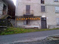pannocchie stese ad essiccare in frazione Previsdomini (Comune di Piateda)