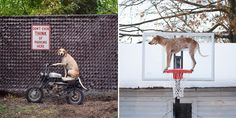 this dog gets on things