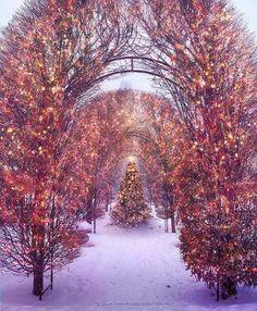 Christmas light arbor   beautiful lights + The Holiday's....