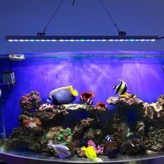 5pcs/lot 81W waterproof Led Aquarium bar Light hard strip lamp for coral reef plant growth beauty fish tank lighting US/DE stock