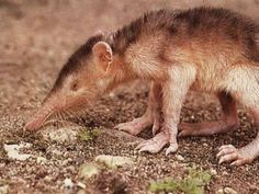ALMIQUI These Are The Ugliest Animals On The Face Of The Planet - All Day