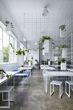 Squint/Opera HQ / Sibling ... wire frame used to create partioning of work spaces with the help of trailing plants ... what a great office!