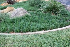 Grass to mass plant under bamboo or feature tree in front garden. I like this layout, with the rocks