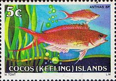 Cocos Keeling Islands 1979 Fishes SG 36 Barbier Fish Fine Mint Scott Other Cocos Keeling Island Stamps HERE