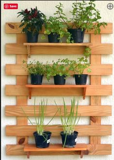 Vertical gardens 519110294550017826 - Easy Wall Shelf Vertical Gardens Source by easydiyandcraft House Plants Decor, Plant Decor, Diy Pallet Projects, Garden Projects, Garden Wall Designs, Walled Garden, Easy Wall, Diy Home Crafts, Garden Planters