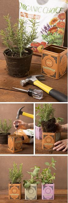 Up your herb game with this easy tea tin planter #DIY! (Even if it's not Mother's Day) ;)