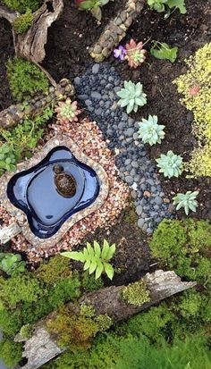 Nemo's Miniature Garden. Melanie and her husband found a baby box turtle last spring and create a habitat for him – miniature garden style! Tortoise House, Tortoise Habitat, Tortoise Table, Turtle Pond, Pet Turtle, Baby Turtles, Turtle Cage, Turtle Aquarium, Tiny Turtle