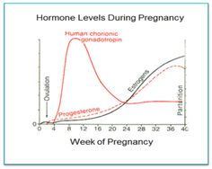 Hormones of pregnancy.