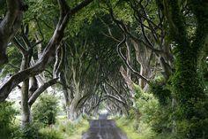 the-dark-hedges Ireland