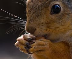Snack time?     Expressive Animal Portrait Photography: Squirrels