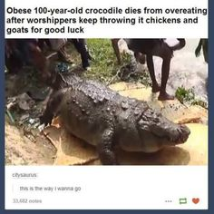 holy shit I didn't even know crocodiles could get fat **this is saved to my funny stuff board because of the comment, not the death of an overweight animal**