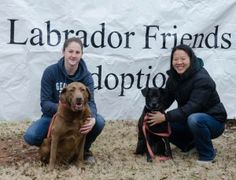 Lil – Adopted 02/08/2014 | Labrador Friends of the South