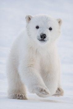 03Polar Bear