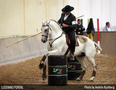 Working Equitation Obstacles