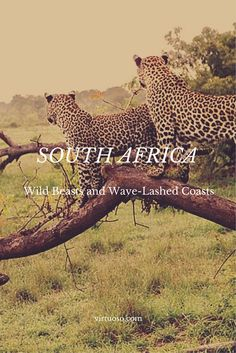 SOUTH AFRICA.  Surf and Safari:  Back to Nature With Wild Beasts and Wave-Lashed Coasts