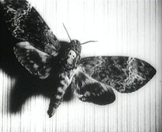 Un Chien Andalou deaths head moth tattoo idea Salvador Dali and Luis Bunuel Death Head Moth Tattoo, Luis Bunuel, Deaths Head Moth, Salvador Dali Art, Classic Tattoo, Film Stills, Black Tattoos, Black And White, Skull