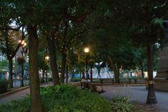 Under The Stars #HamOnt #GorePark Under The Stars, Park, Plants, Parks, Flora, Plant, Planting