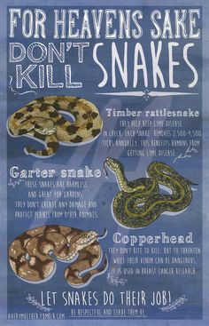 """For Heaven's Sake Don't Kill Snakes"" by Avery Muether"