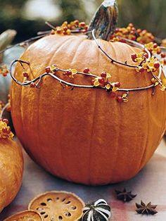 Pumpkins and Vines