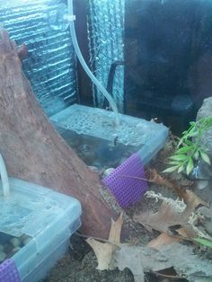 A Guide to Land Hermit Crab Pools Hermit Crab Tank, Hermit Crabs, Hermit Crab Habitat, Crab Decor, Aquarium Pump, Pool Sizes, Animal Room, Water Treatment