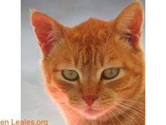 Gatos en adopción  España  Las Palmas - Gran Canaria  Las Palmas G.C. March 09 2018 at 09:07PM   ver foto  #ADOPCIÓN  Contacto y Info: https://leales.org/animales-en-adopcion/gatos-en-adopcion/ver-foto_i3695 #Difunde en #LealesOrg un #adopta y sé #acogida para #AdoptaNoCompres O un #SeBusca de #perro o #gatos; #perdido o #encontrado ℹ En todos los navegadores: Leales.org y en todas las redes sociales: @lealesorg   Acerca de esta publicación:  Esta publicación NO ha sido creada por Leales.org…