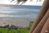 Pandanus tree with a beach view!