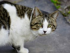 Challenges of Taking in Street Cats  https://www.petmd.com/cat/care/challenges-taking-street-cats?utm_campaign=crowdfire&utm_content=crowdfire&utm_medium=social&utm_source=pinterest