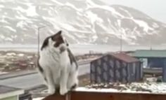 Meet a cats new strange flying friend - A Bald Eagle