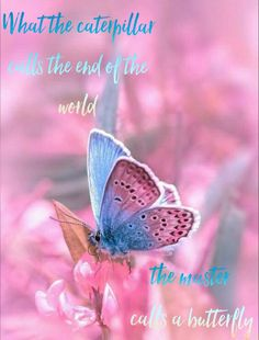 What the caterpillar calls the end of the world the master calls a butterfly. #catapillar #master #endoftheworld #butterflies #butterfly #nature #pink #blue #quotes #life #lifequotes #hope #faith #livelife #love #lovelife #transformation #transition