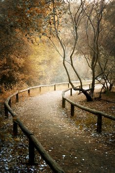 *The path to wherever you want it to go~~~