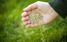 Comment semer du gazon : http://www.travauxbricolage.fr/travaux-exterieurs/jardin-paysagisme/semer-du-gazon/