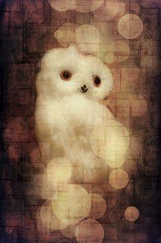 O Owly Night © Loriental Photography - Prints available for sale in my European and US online shops (France : http://www.alittlemarket.com/boutique/loriental_photography-398781.html - Germany : http://www.artflakes.com/en/shop/loriental-photography - USA : http://fineartamerica.com/profiles/loriental-photography.html)