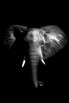 The Elephant -beautiful. would love a canvas or gloss print of this