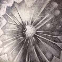Dandelion by Jessica Damron graphite drawing