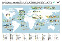 Cette carte du CIAT indique la région d'origine d'où proviennent les principaux fruits et légumes. Si je savais que les patates et les tomates venaient des Andes j'ignorais que les myrtilles venaient d'Amérique du Nord et les pastèques du sud de l'Afrique par exemple.