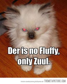 There is no fluffy…